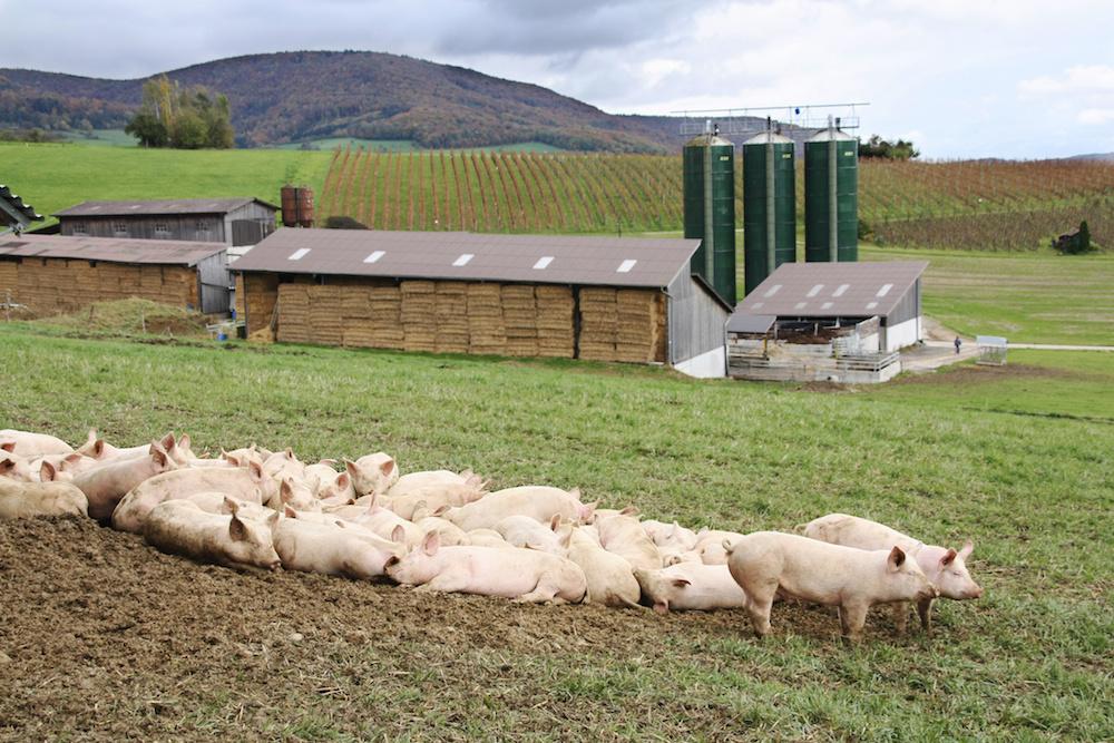 animal waste on a farm